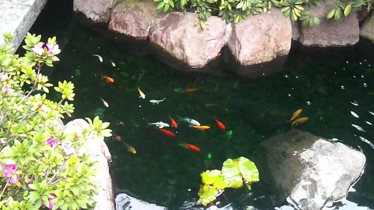 estanque peces